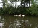 Flusswanderung auf der Vils_9