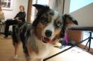 Seminar Tiergestützte Pädagogik und Therapie_26