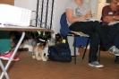 Seminar Tiergestützte Pädagogik und Therapie_6