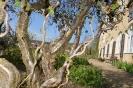 Kloster- und Naturerlebnisgarten im April 2017_1